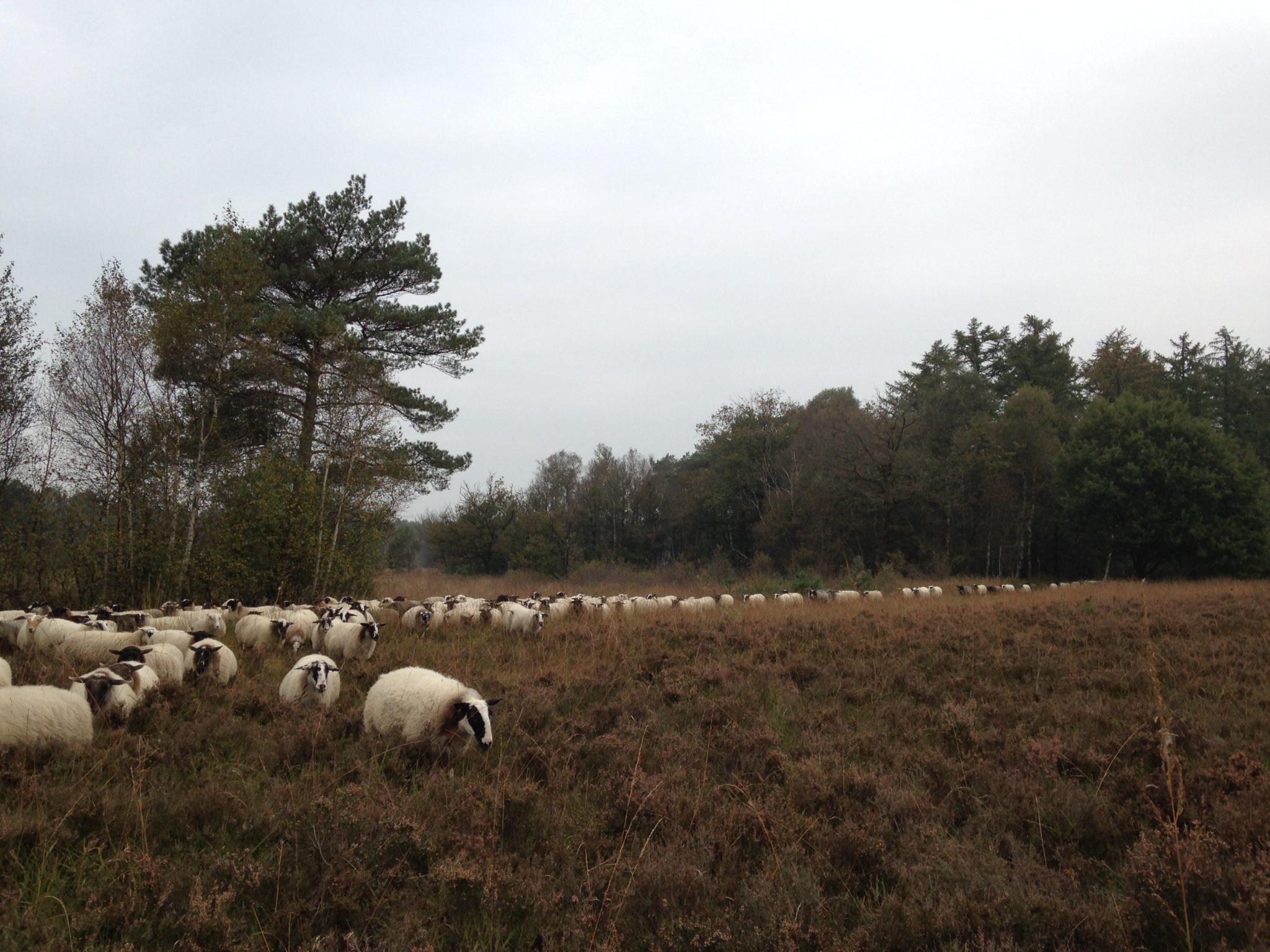 5 vierkante meter natuur en een wandeling met de kudde
